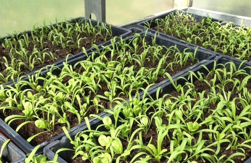vernon valley farm – seedlings in in greenhouse