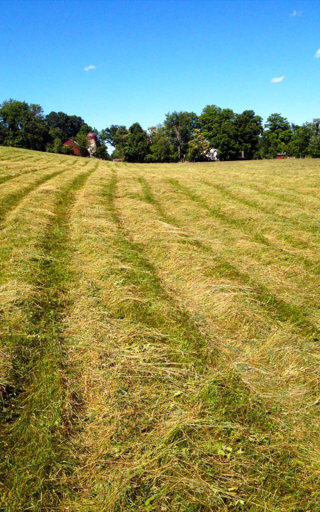 vernon valley farm - mowed field of hay