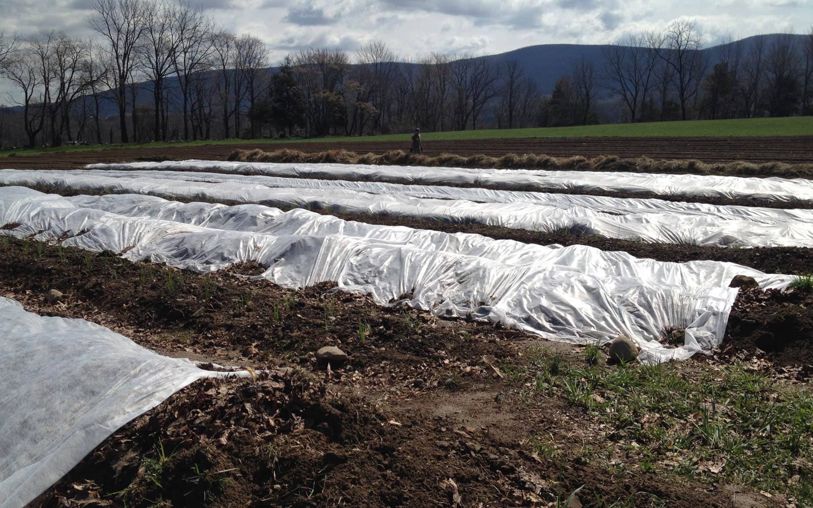 vernon valley farm - vegetable bed covered with tarp