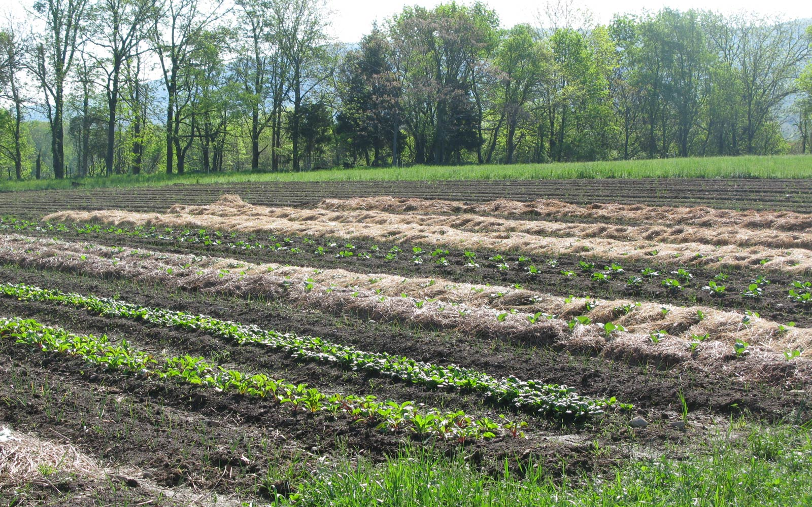 vernon valley farm - vegetable field sprouting