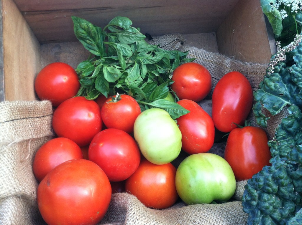 Tomatoes - Vernon Valley Farm